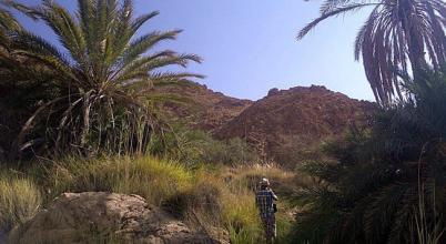 Bou-Hedma Nemzeti Park