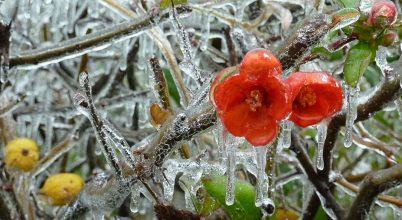 Jégbe fagyott természet