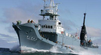 Nem vadászik bálnára Japán