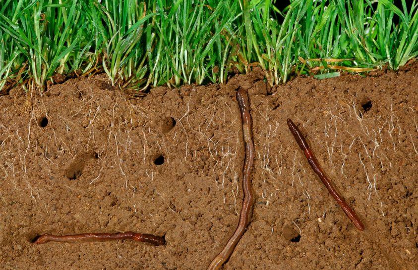A talajok nemzetközi éve – 2015