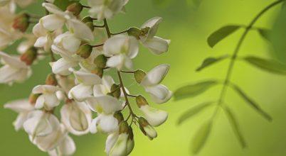 Mégsem veszélyesek az idegenhonos növényfajok?