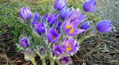 A tavasz szépséges üzenete
