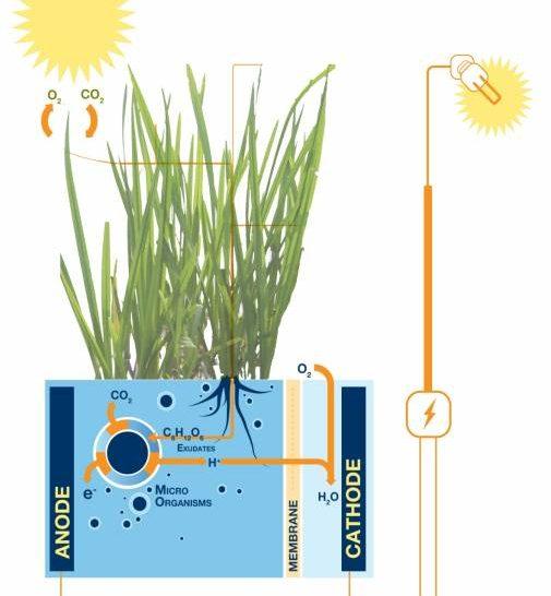 Növények termelte elektromos áram