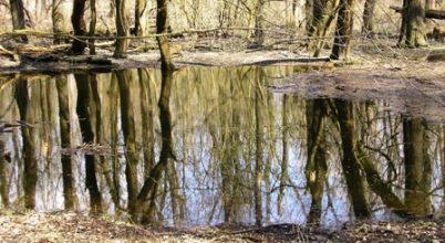 Tavaszi gyalogtúrák a Gemencbe