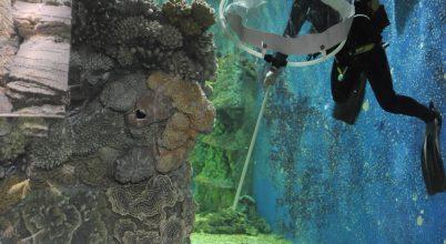 Cápavizsgálat Nyíregyházán