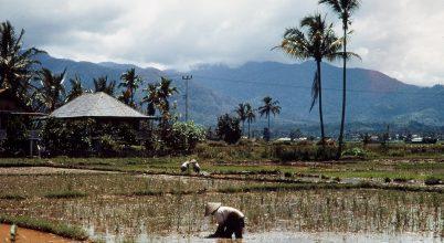 Öt érdekesség Indonéziáról