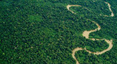 Óvjuk bolygónk erdőit!