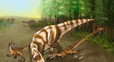 Egy kiváló szimatú ősi ragadozó