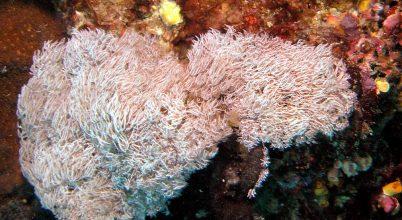 139 új faj a Mekong vízgyűjtőjén