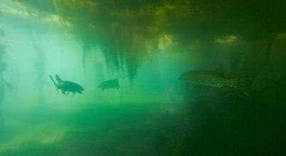 """""""Sej-haj folyóba, sok a hal valóba…"""""""
