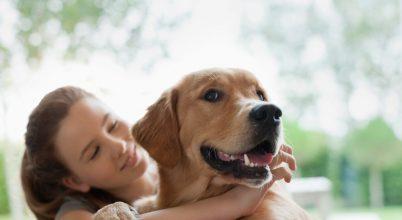 A kutyák szociális együttműködése