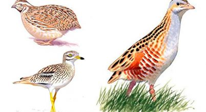 Melyik legyen a 2016. év madara?