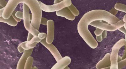 Ételt rendelő baktériumok
