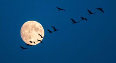 Költöző madarak nyomában