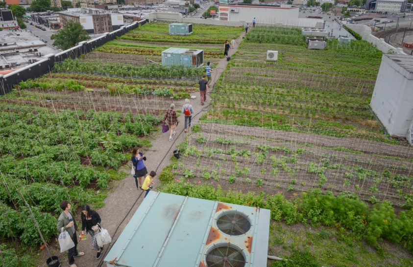 Friss zöldség a tetőről?