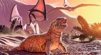 Meglepő helyen került elő a fosszilis leguán