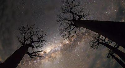 A hónap asztrofotója: Tejút a baobabfák között