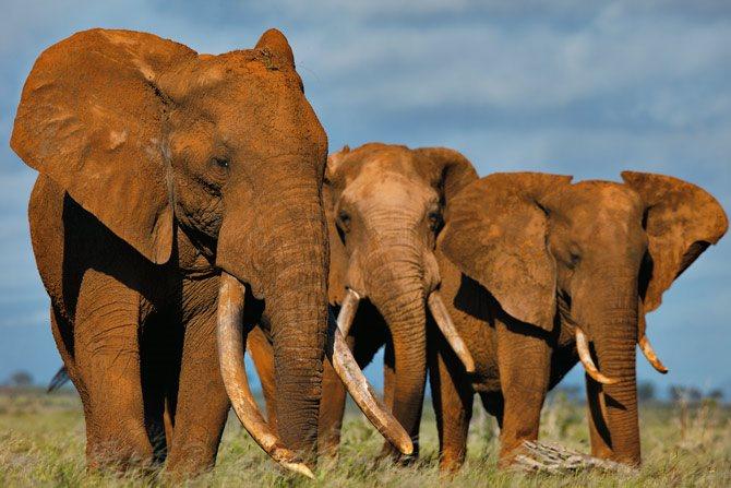 Vádemelés elefántcsont-csempészetért