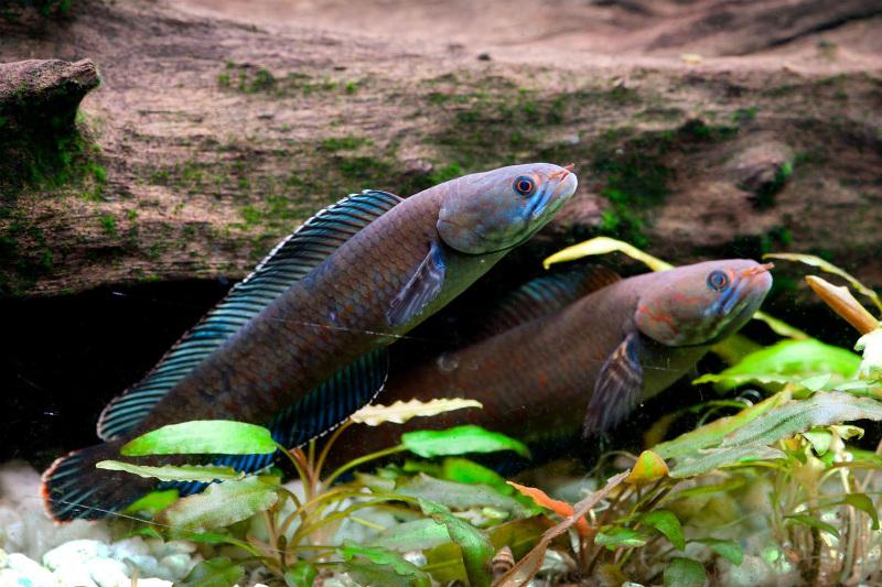 Újabb fajok a kelet-himalájai régióban