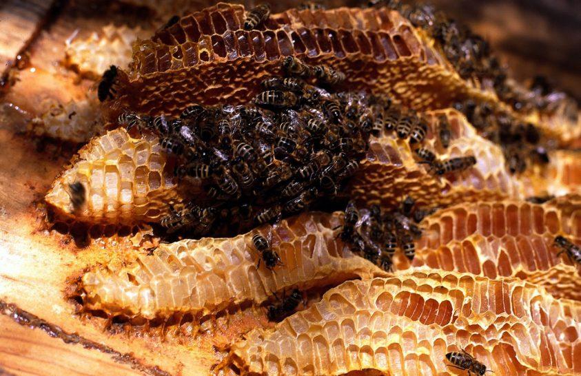 Ősi méhészkedés