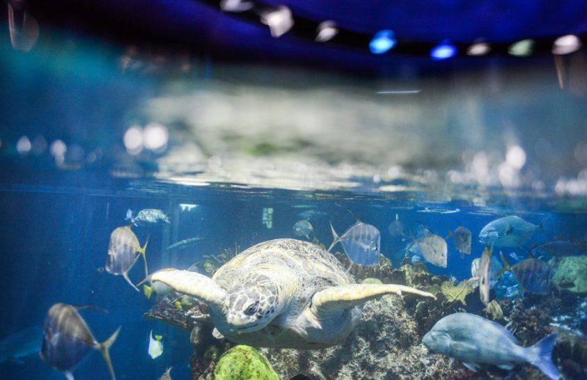 Veszélyeztetett teknősök otthona