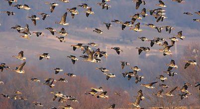 Vadlúd Sokadalom és madármegfigyelő verseny Tatán
