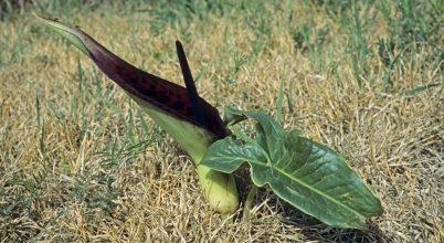 Egy növény gyógyító ereje