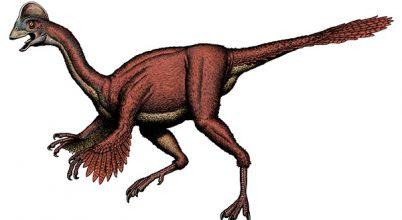 A legérdekesebb új fajok 2014-ből
