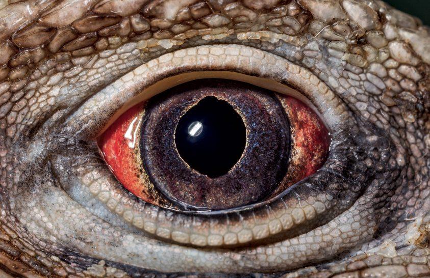 Állati ez a szem