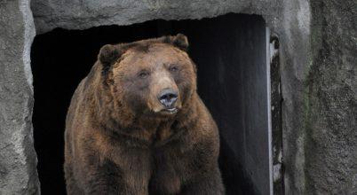 Vajon mit jósolt a medve?