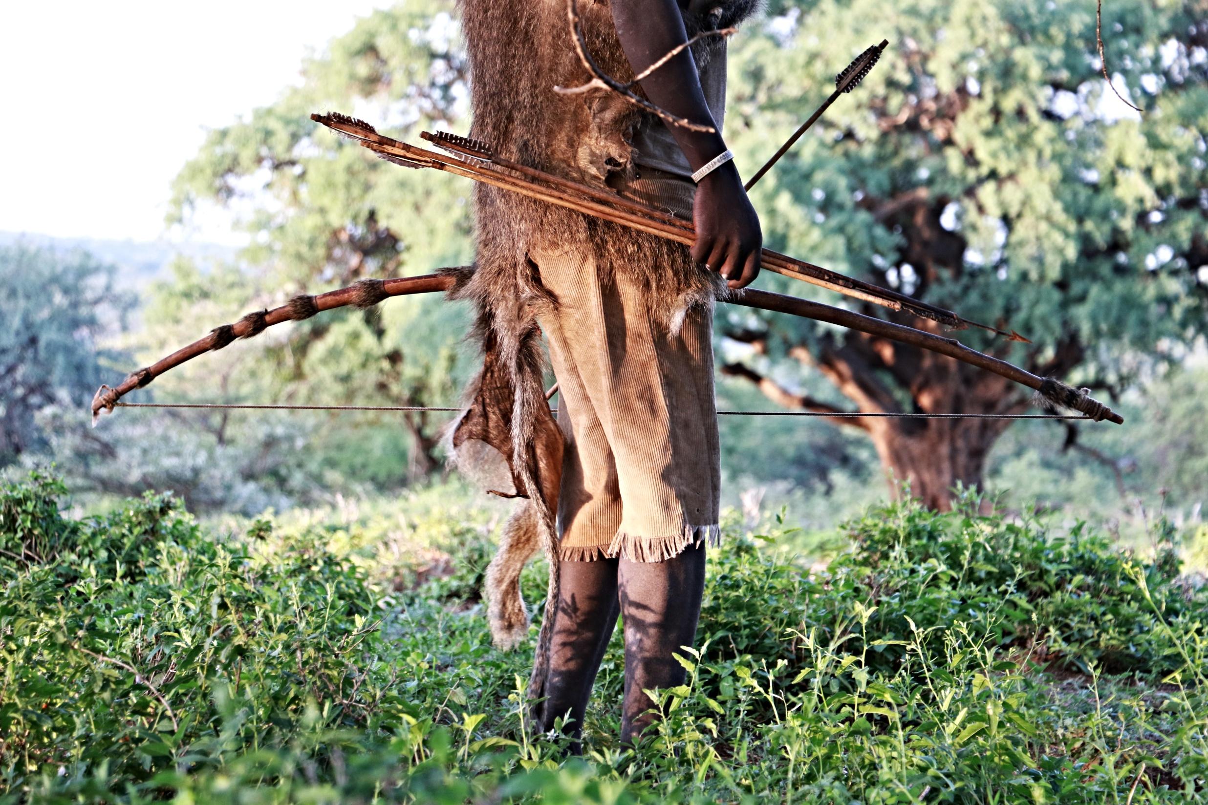 vastag afrikai zsákmány