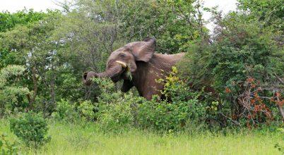 Elefántok, keselyűk, termeszek