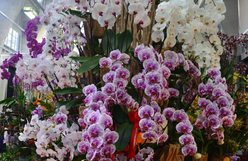 Nem csak fehér orchideák