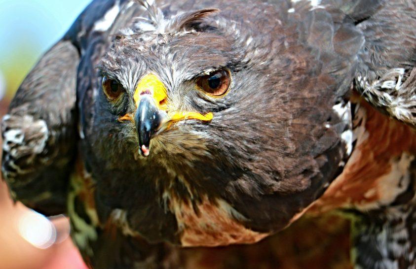 Afrikai madármentők