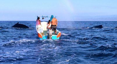 Vendégségben a bálnák nyári lakóhelyén