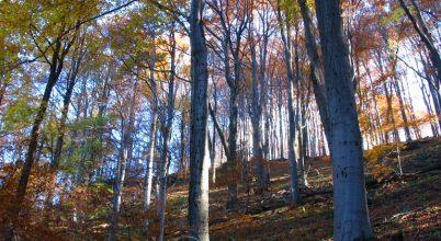 Az öreg erdők védelmében