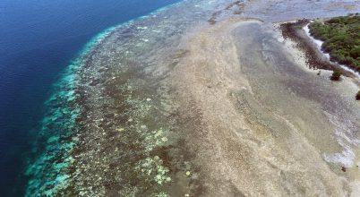Korallok egyre nagyobb veszélyben