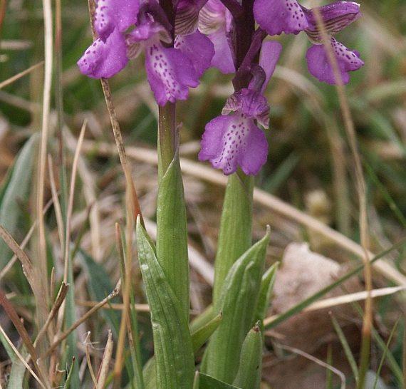 Orchideás túrák