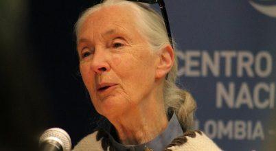 Jane Goodall és tudóstársai a grizzlykkel vannak