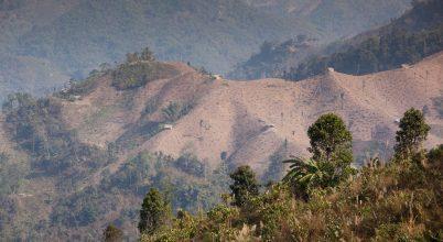 Indiában egyre több lehet az erdő