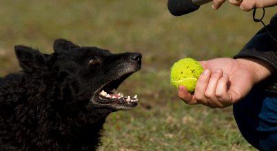 Közös nyelven ugatnak a kutyák