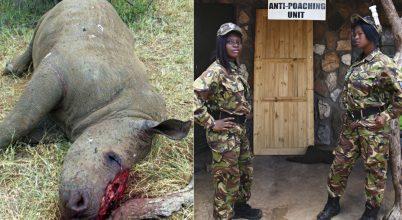 Vagány nők az orvvadászat ellen
