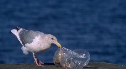 Apró műanyagok a táplálékban