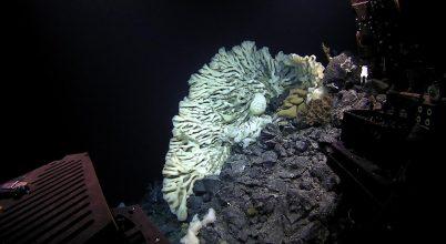 Óriási tengeri szivacsot találtak Hawaii közelében