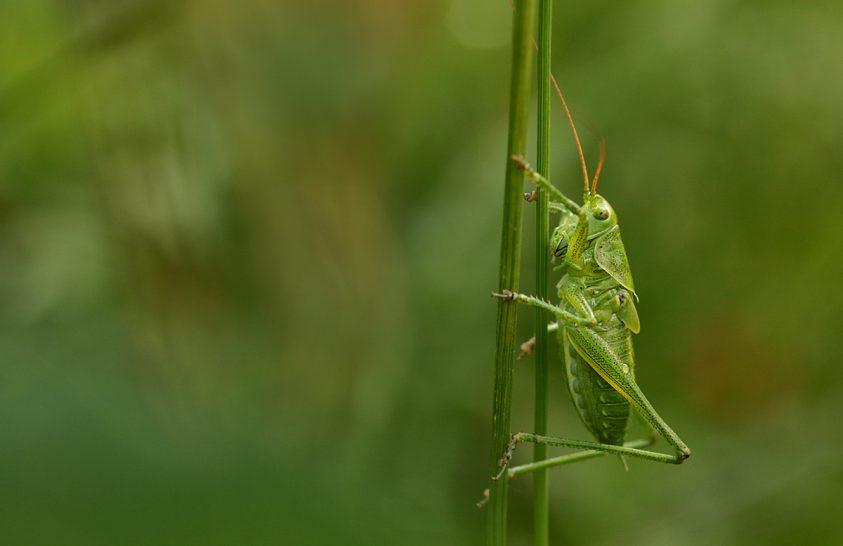 Zöldben zölden