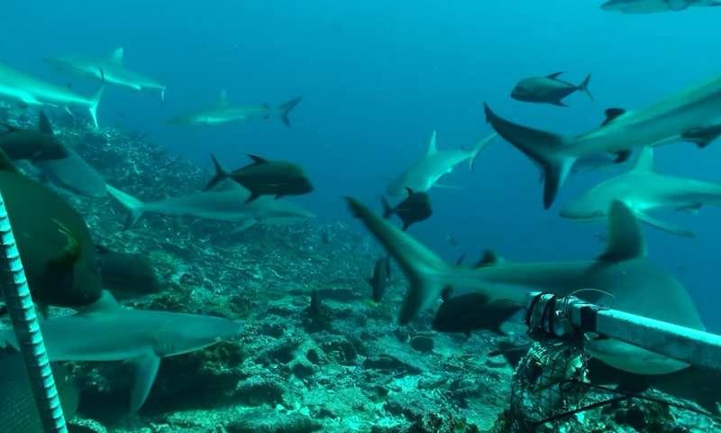 A cápaszámlálás meglepő eredményei