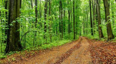 Úttörő kísérlet erdeink megőrzéséért