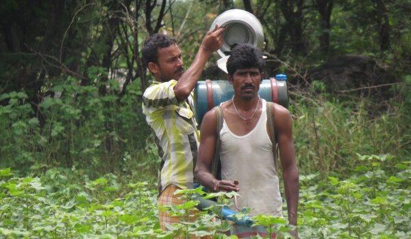 A GMO haszonnövények veszélyeztetik a biodiverzitást