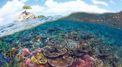 Óriási tengeri park kerül védelem alá Malajziában