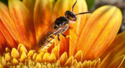 A méhgyilkos most fölfedi titkát